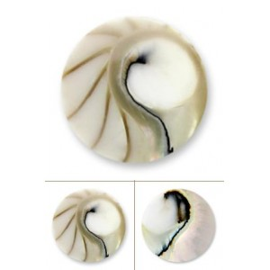 Nautilus blanco tamaño grande